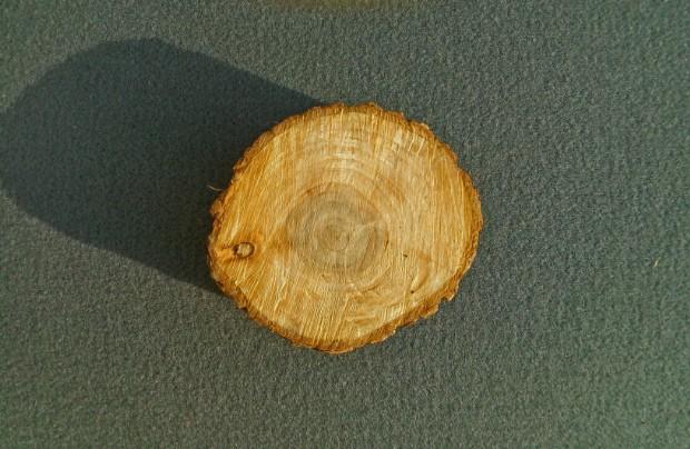 Il legno di Olmo - arceriastorica
